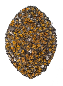 "MADDISON COLVIN, Monarchs from ""Swarms"" Series"